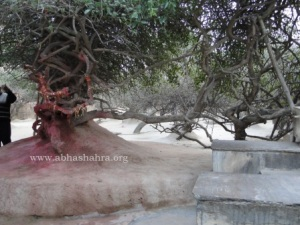 This tree is opposite the Rang-Mahal; people worship here