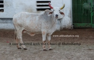 A painted Gau with Shreeji Chavi