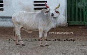 A painted Gau with Shreeji Chavi