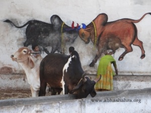 You can see the Bulls in the background. All of Nathdwara has hand painted walls of various forms