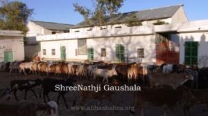 ShreeNathji Gaushala