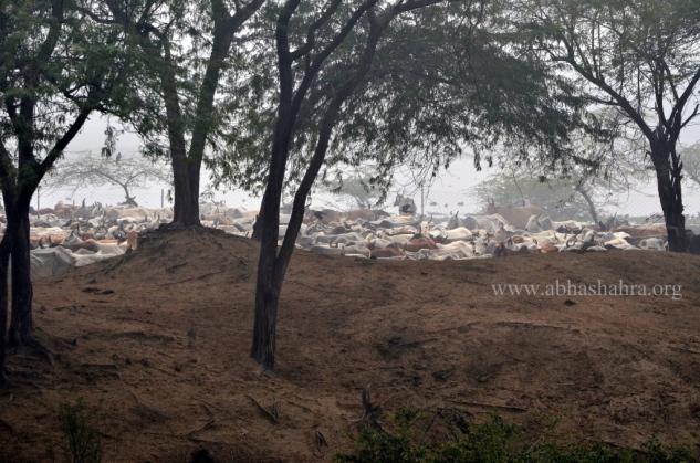 View from the Baithakji across the Krishn Kund
