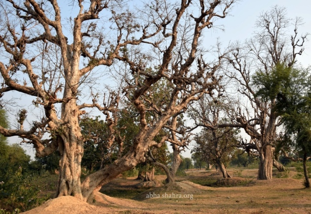 Very very old Kadamb trees, very few are left today. The name of this area is because of the presence of several Kadamb trees.