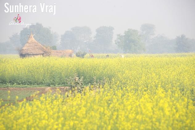 A Golden Vraj Mandal, Jai Shree RadhaKrishn