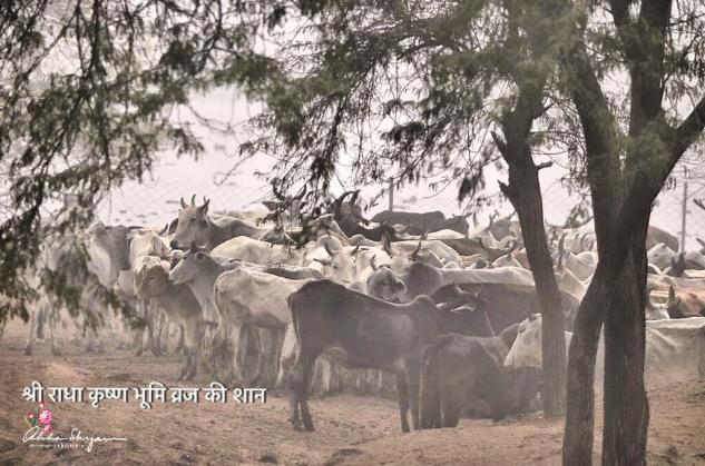 Shree RadhaKrishn divine bhumi, Vraj Mandal