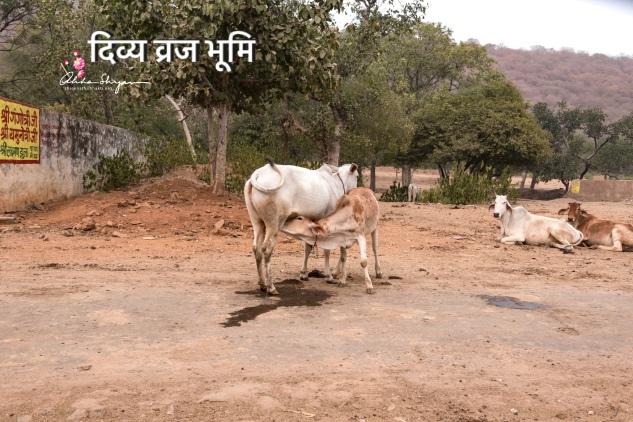 Vraj Mandal photos
