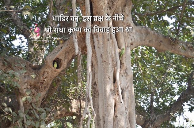 BhandirVan at Vraj Mandal
